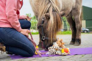 Hersenwerk voor paarde